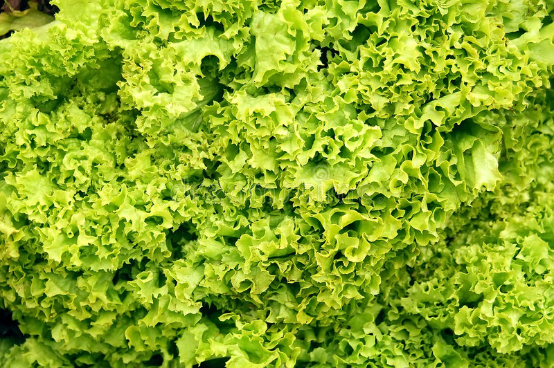 Download Fresh lettuce stock image. Image of supermarket, texture - 716655
