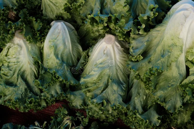 Fresh Lettuce Organic Farmers Market royalty free stock images