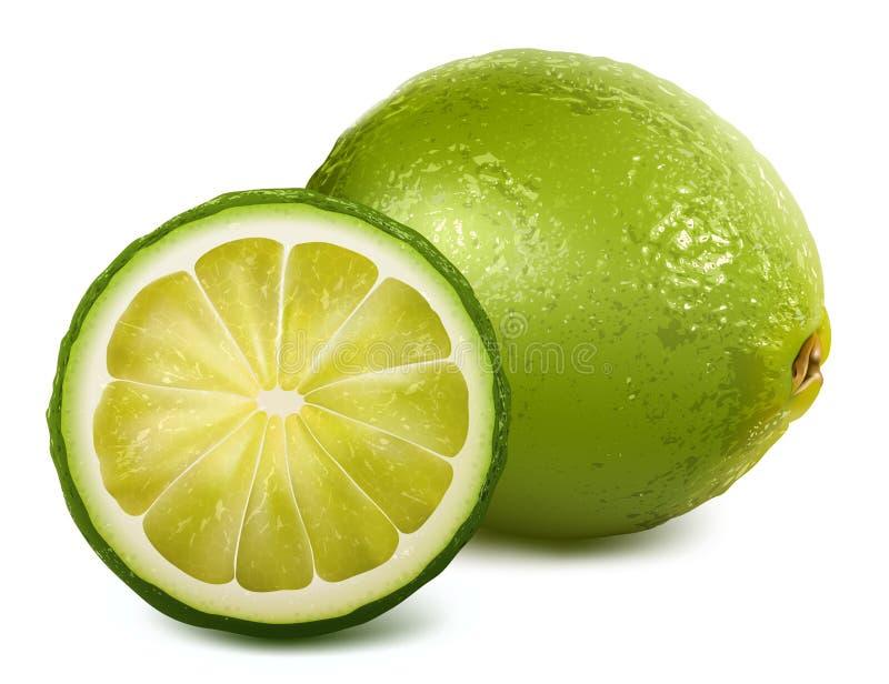 Fresh lime royalty free illustration