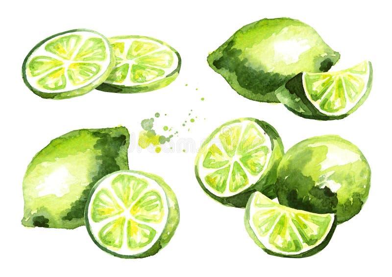 Fresh lime fruit compositions set. Watercolor hand drawn illustration. Fresh lime fruit compositions set. Watercolor hand drawn illustration royalty free illustration