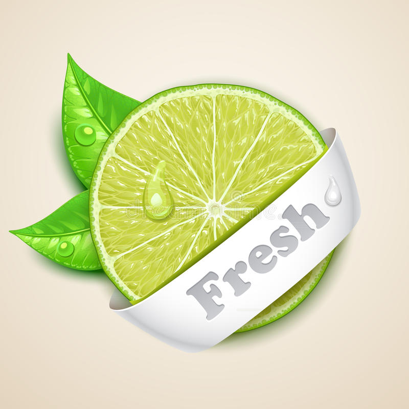 Fresh lime royalty free illustration