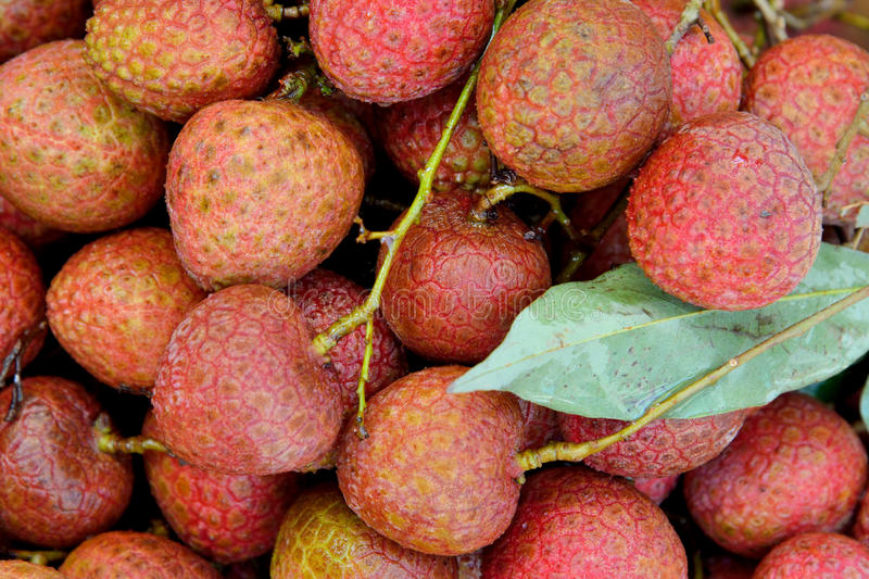 Download Fresh litchi with leaves stock photo. Image of life, healthy - 32990504