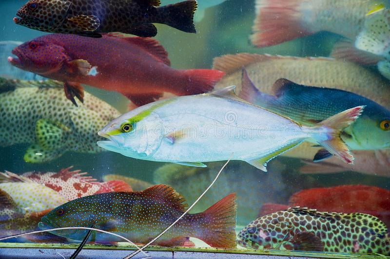 Fresh live fish catch of the day behind the wet stall glass at the seafood market in Hong Kong, China. stock image