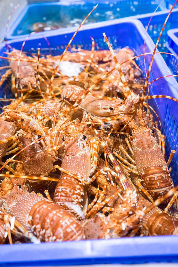 Fresh live lobsters stock image