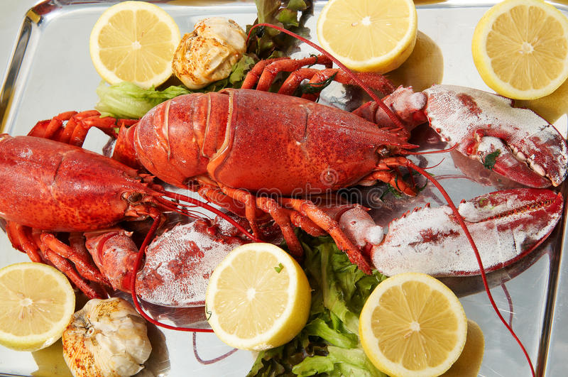 Download FRESH LOBSTER . Royalty Free Stock Images - Image: 15011489