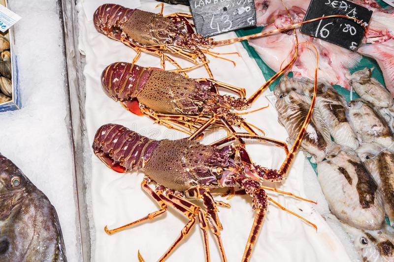 Fresh lobster on ice for sale at fishmarket Palma Mallorca. Fresh lobster on ice. Fresh lobster delicacy seafood for sale in the famous tourist attraction stock image