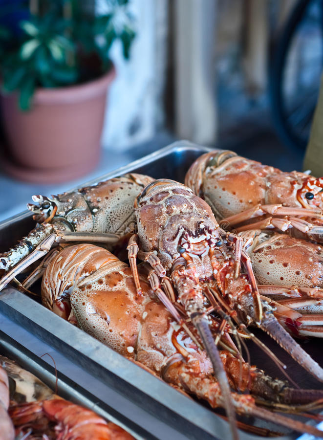 Fresh lobster plate royalty free stock photo