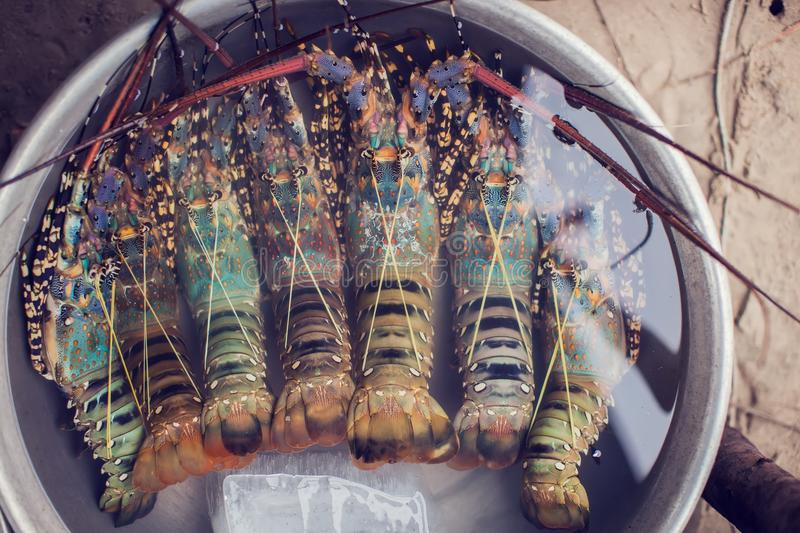 Fresh lobster in the market stock image