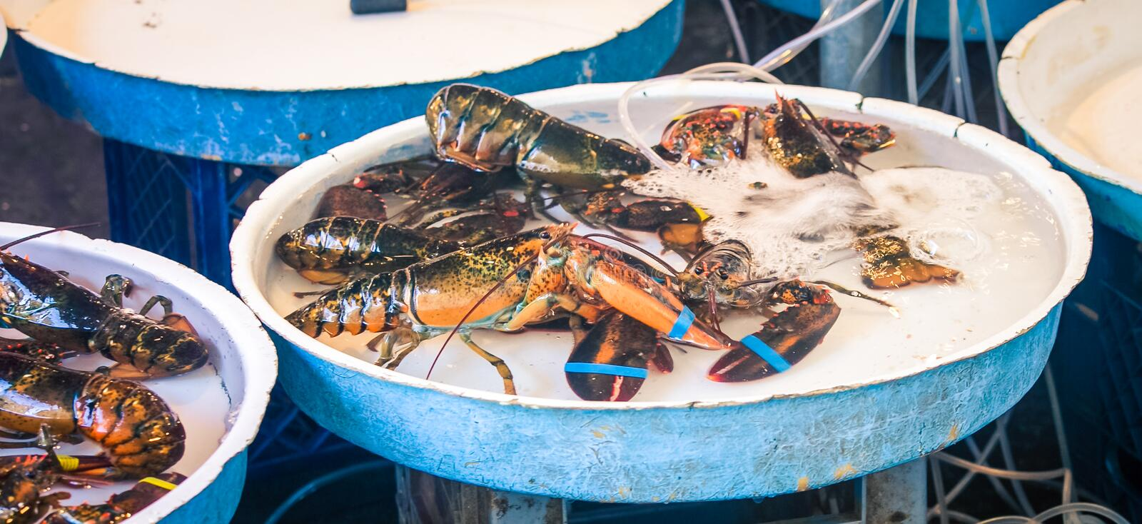 Fresh lobsters on ice. At a market in Naples Italy royalty free stock photo