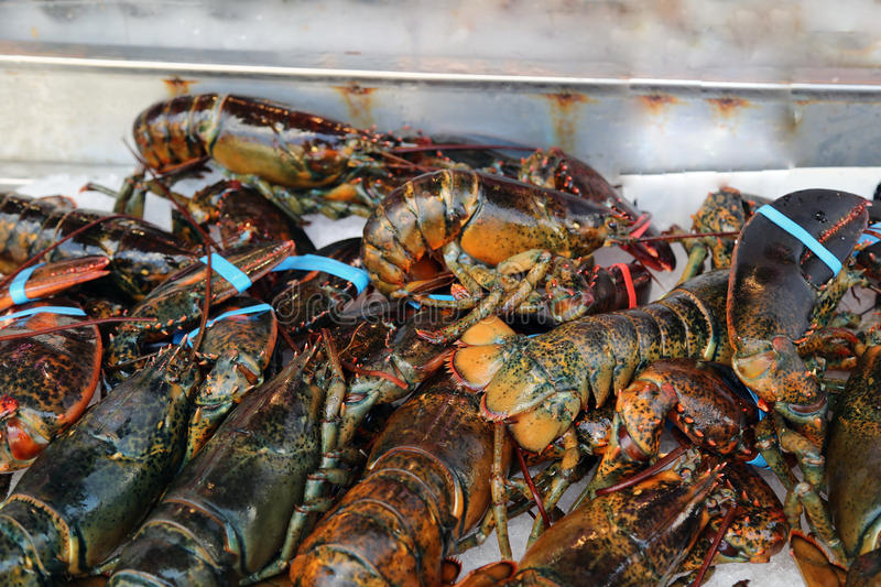 Lobsters. Fresh lobsters at a seafood market stock photography