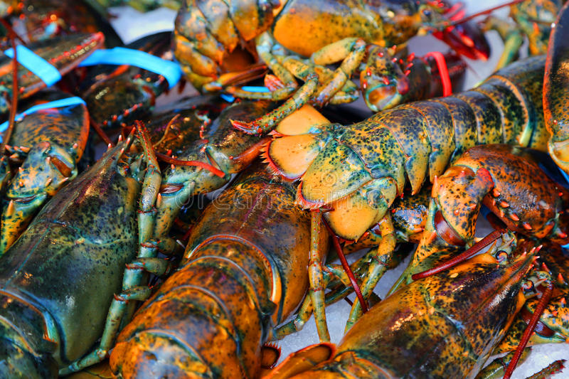 Lobsters. Fresh lobsters at a seafood market stock image