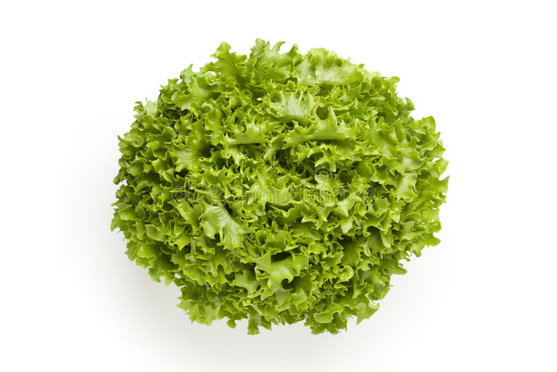 Fresh Lollo bionde lettuce royalty free stock photography