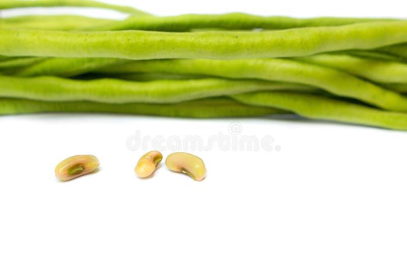 Fresh long beans, cow- peas on a white background. Fresh long beans,cow-peas,yardlong bean on a white background, and Blur blurred the background. select focus royalty free stock photos