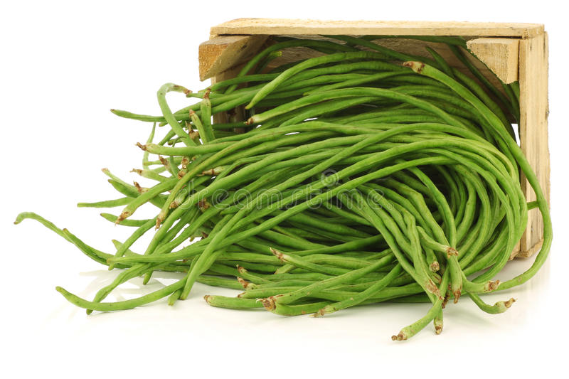 Fresh long beans in a wooden crate. Fresh long beans(Vigna unguiculata subsp. sesquipedalis) in a wooden crate on a white background royalty free stock photo