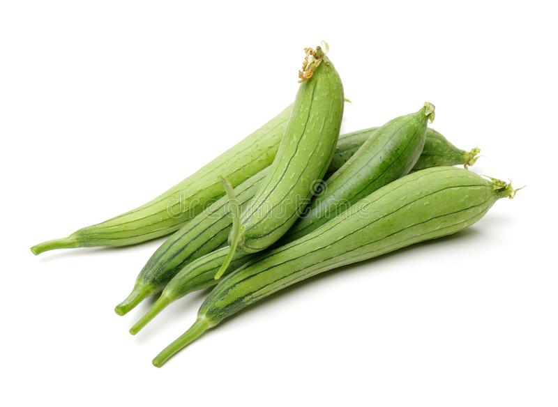 Fresh loofah isolated on white. It is very rich in nutritional value. It can not only edible, but also have medicinal value.in tr. Aditional Chinese medicine stock image