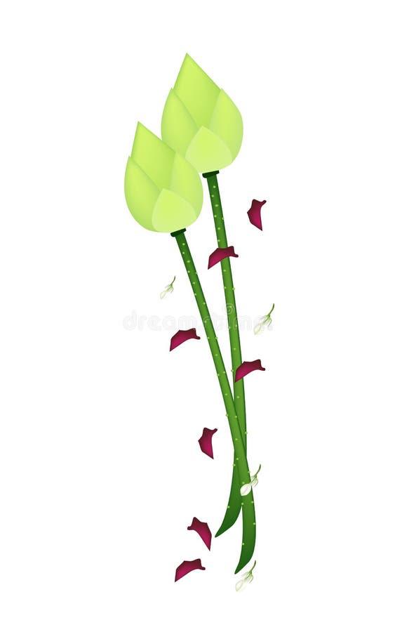Fresh Lotus Flower on A White Background stock illustration