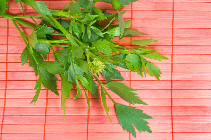 Fresh Lovage. On red background stock images