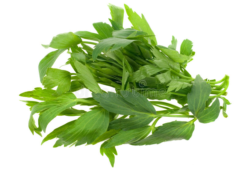Fresh lovage herb royalty free stock image
