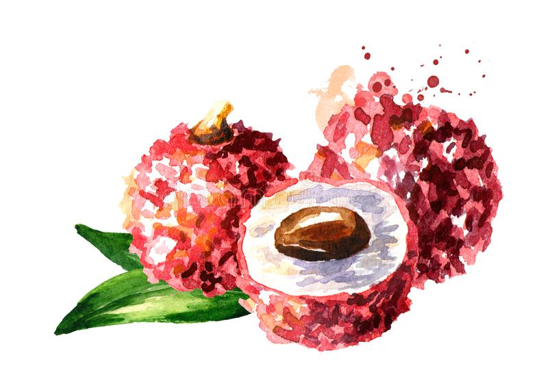 Fresh lychee fruits. Watercolor hand drawn illustration, isolated on white background. stock illustration