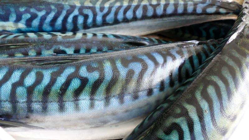 Fresh Mackerel fish background royalty free stock photos