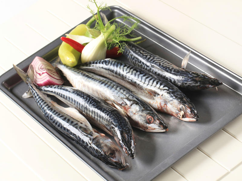 Fresh mackerels royalty free stock images