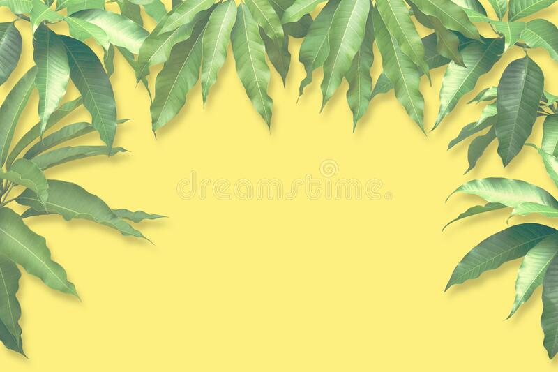 Fresh Mango Green Leaves with Retro Filter Effect on Yellow Background royalty free stock photography