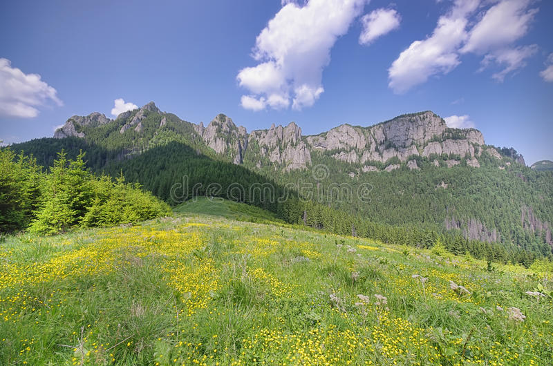 Download Fresh meadow stock image. Image of farming, nature, pasture - 29238781