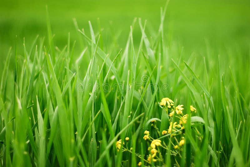 Fresh meadow royalty free stock images