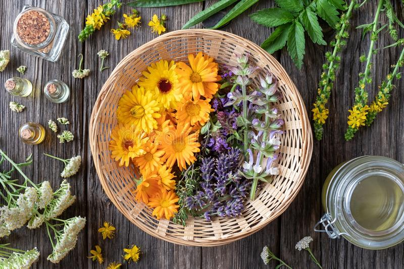 Fresh medicinal plants and essential oils royalty free stock photo