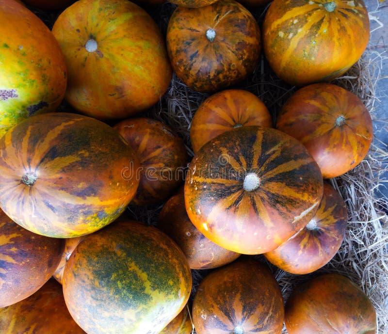 Fresh melon or cantaloupe in the market royalty free stock photos