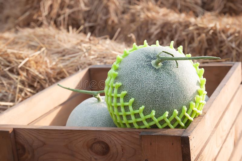 Fresh melons in wooden box on straw. Healthy fruit stock photography