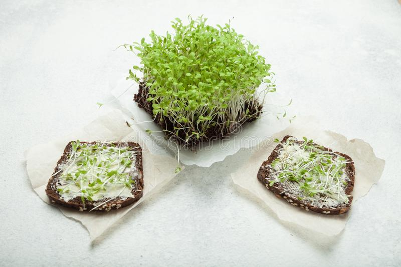 Fresh micro-green and two sandwiches on a white background. Healthy lifestyle royalty free stock photos