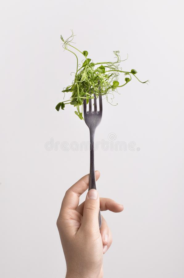 Free Fresh Microgreen On Fork In Female Hand Over White Background Royalty Free Stock Photo - 164937095