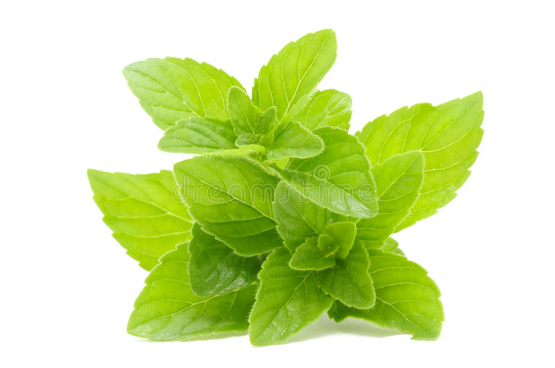 Fresh Mint royalty free stock photography