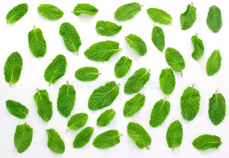 Fresh mint isolated on the white background.Set,leaves. Top view stock image