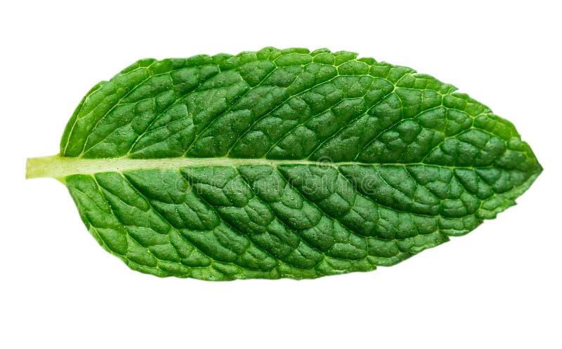 Fresh mint leaf isolated on white background, macro royalty free stock photo