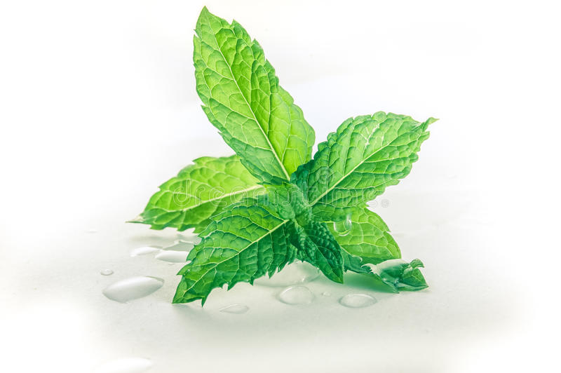 Download Fresh Mint Leaves Royalty Free Stock Photo - Image: 25645775