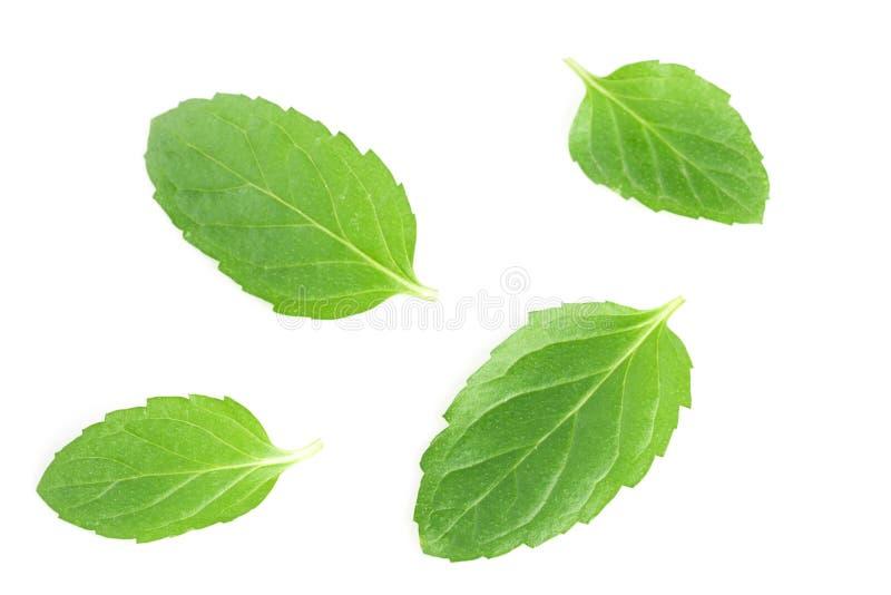 Fresh mint leaves isolated on white background.  stock image