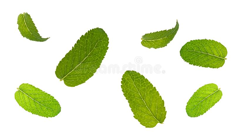 Fresh mint leaves pattern isolated on white background. royalty free stock photo