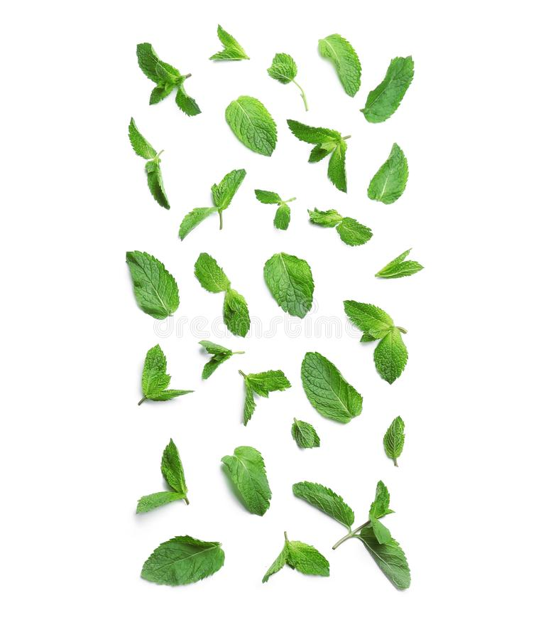 Fresh mint leaves on white background. Flat lay royalty free stock image