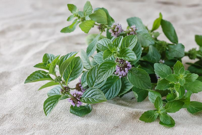 Fresh mint on a linen background stock photo