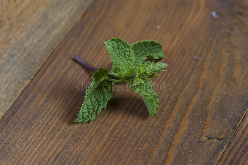 Download Fresh mint stock photo. Image of balm, component, therapies - 83700620