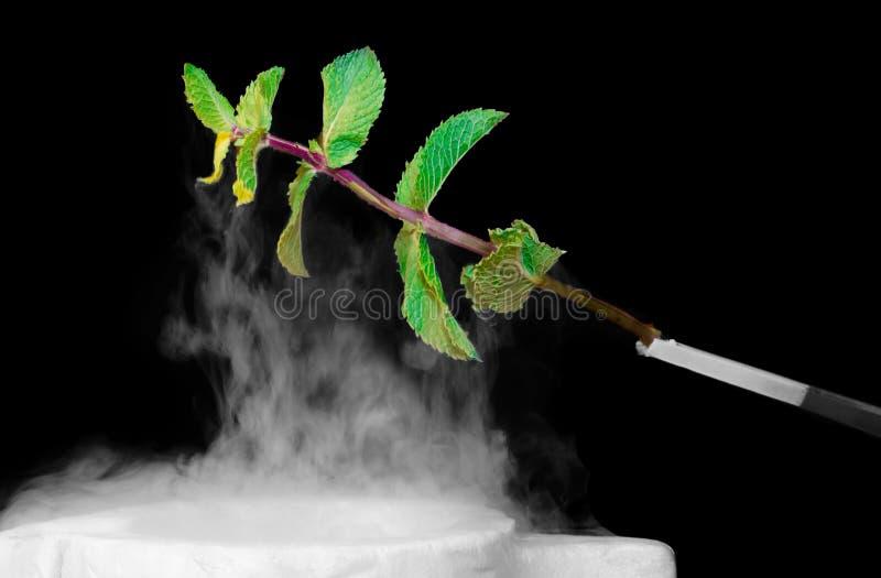 Fresh mint sprig dipped in liquid nitrogen stock image