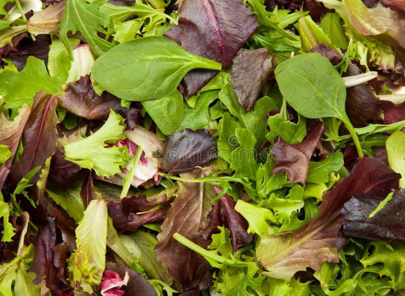 Fresh mix salad. Fresh spring salad mix background textures stock image