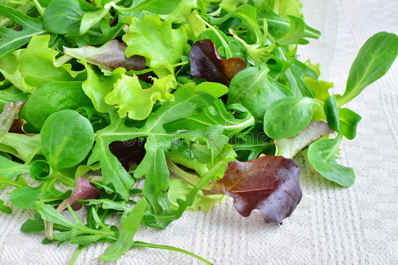 Fresh mixed greens leaf vegetables of arugula, mesclun, mache royalty free stock images