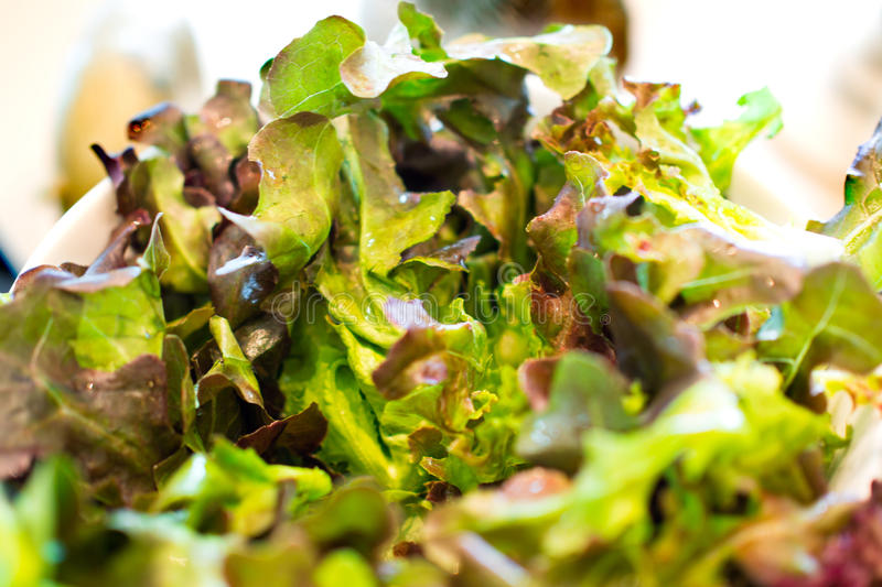 Fresh mixed lettuce salad in a bowl close up stock images