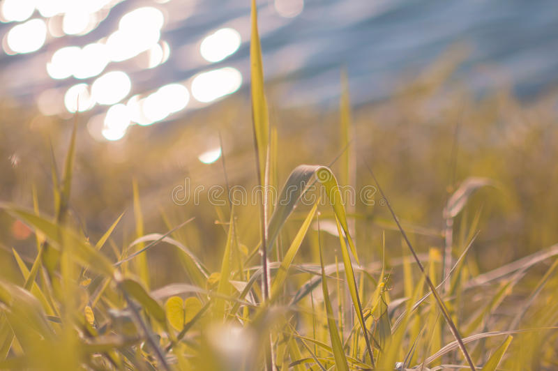Fresh morning dew on a spring grass in early morning. Sunny day royalty free stock image