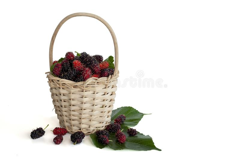 Fresh mulberry with leaf in a basket isolated on white background. stock photo