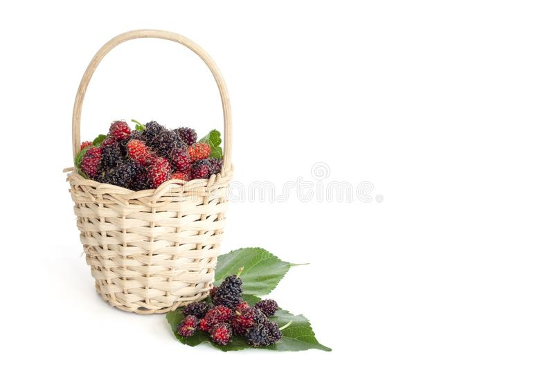 Fresh mulberry in a rattan basket isolated on white background. royalty free stock images