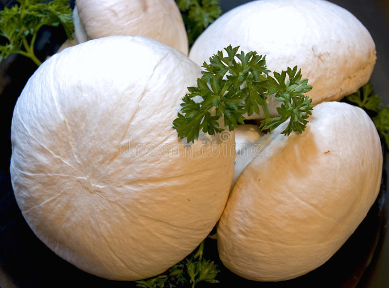 Fresh mushroom royalty free stock images